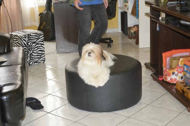 cachorro-apto