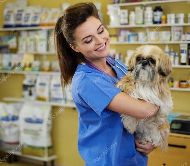 cachorro-veterinario